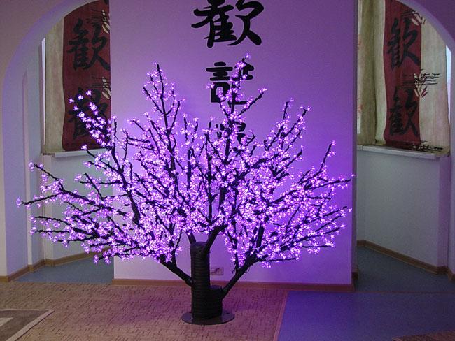 Фотографии салона красоты Сакура в жулебино